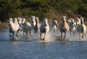 chevaux-camargue-plage